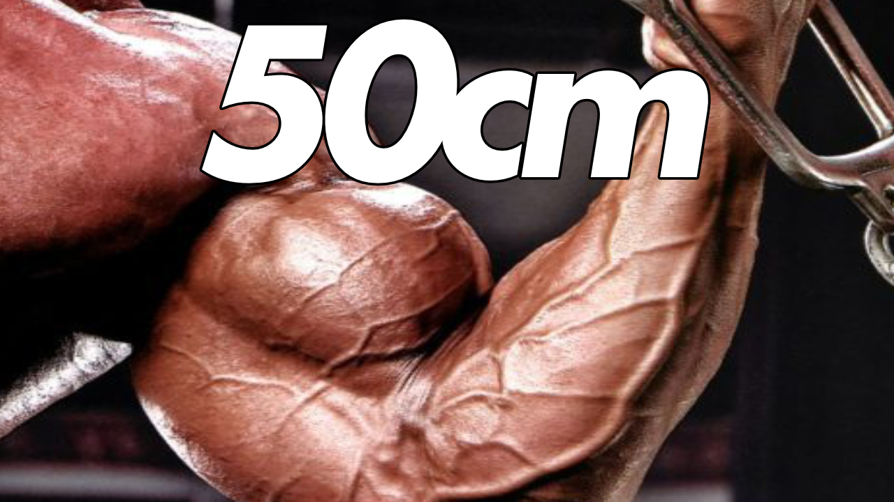 50cm BRACCIA