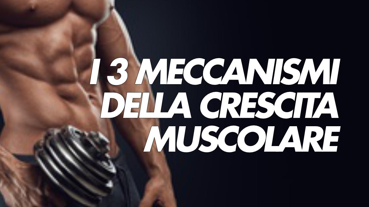3 meccanismi della crescita muscolare
