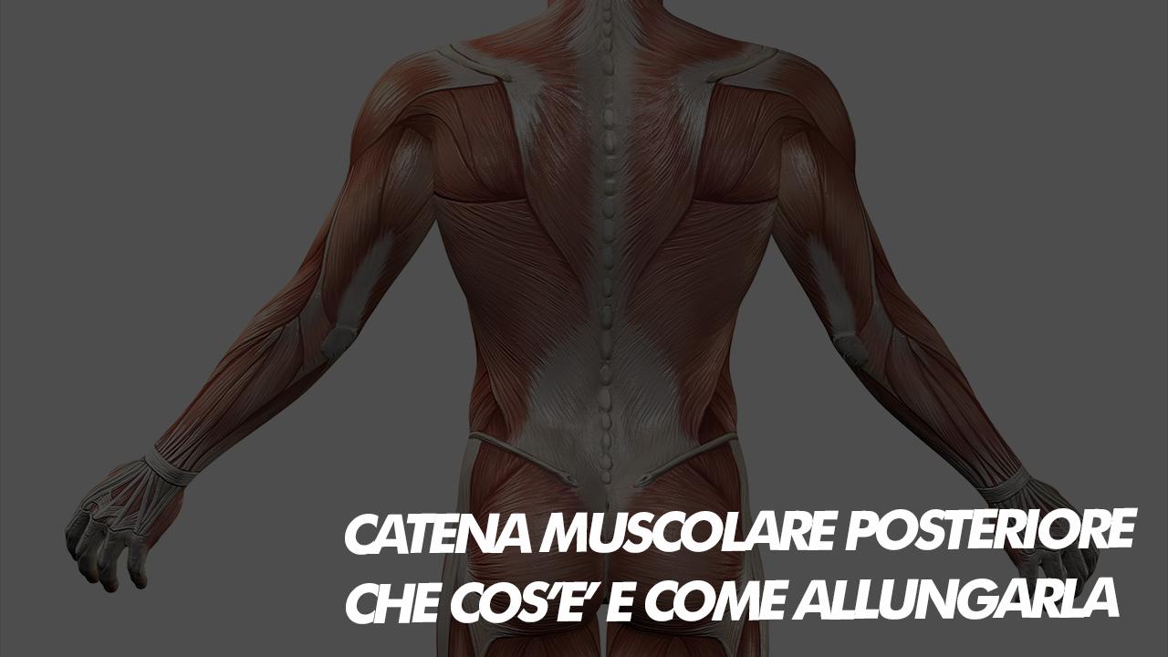 catena muscolare posteriore